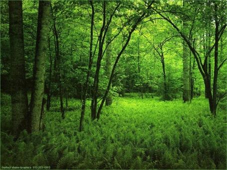 bosque[1].jpg